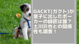 gackt-dog